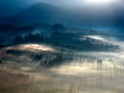 Forests Drenched in Light and Fog by Boguslaw Strempel